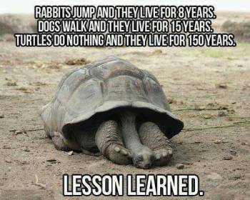 Lazy Turtle.