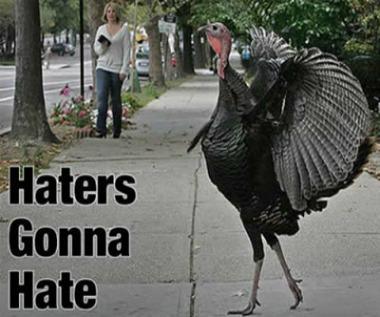 I didn't choose the turkey life, the turkey life chose me.