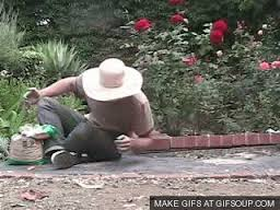 Why I don't garden.